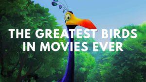 Suurin Birds In Elokuvat Koskaan