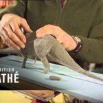 als 1967 Dinosaur modellen werden animatiefilms voor