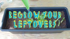 Wie man sich einfach eigenen Salat züchtet