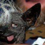 Der hässlichste Hund 2016