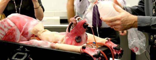SynDog: Synthetische Hunde-Leiche für Medizin-Studenten