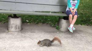Wenn ein Eichhörnchen Zähne zieht