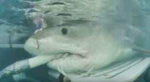 Ultraschallbild eines Hai-Babys