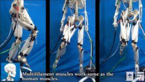 Muskel-Skelett-Roboter
