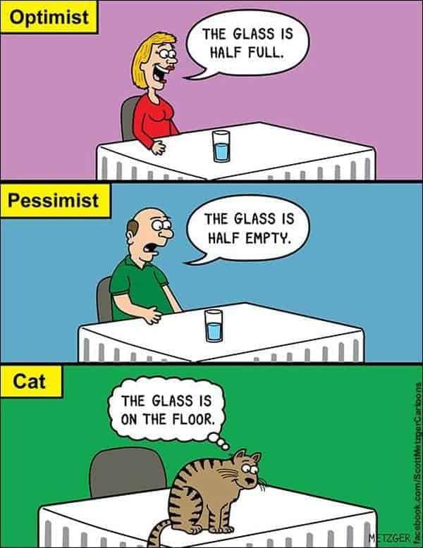 Der Optimist, der Pessimist und die Katze