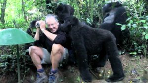 Mountain gorillas accepted a gray-haired man as one of their