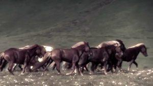 DBD: War Horse - Tengger Süvari