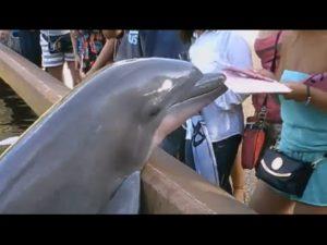 Delfiner som iPads