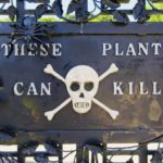 The deadliest garden in the world