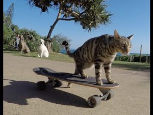 En skateboard katt