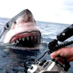gevangen eng aanvallen van haaien met GoPro
