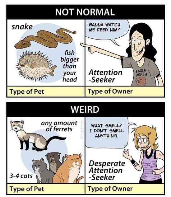 The creepiness of pet owners
