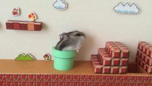 Hamster Spelar Super Mario Bros i verkliga livet