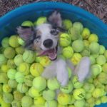 I'm a Self Made Millionaire: The happiest dog in the world in Tennisballbad