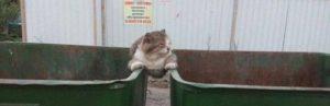 Die Jean-Claude Van Damme Katze