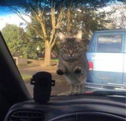 Wenn du vergisst deine Katze zu füttern
