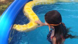 Kids swim with giant python