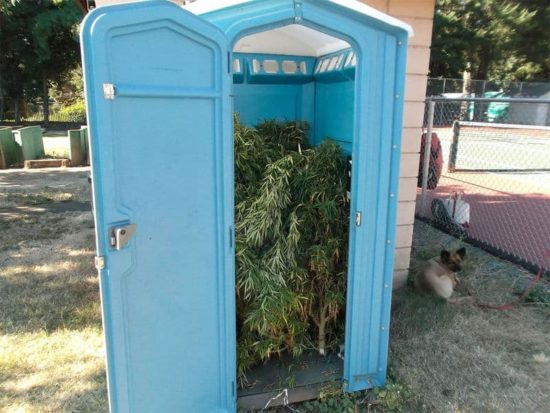 Draagbaar toilet vol met marihuana