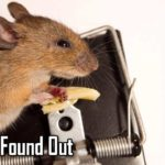 Mögen Mäuse wirklich Käse?