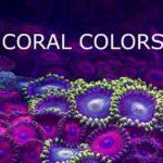 koralli värit: Värimaailma koralleja