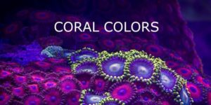 coral colors: The color world of corals