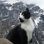 Gimmelwald's mountain rescue cat leads stray tourists from the mountains