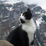 Gimmelwald's bergredding kat leidt verdwaalde toeristen uit de bergen
