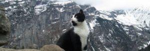Gimmelwald n Vuoristopelastus kissa johtaa harhailla matkailijoita vuoristossa