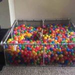 Small dog loves his ball pool
