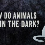 As animals can see in the dark