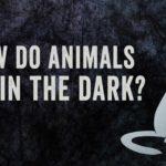 Som dyr kan se i mørket