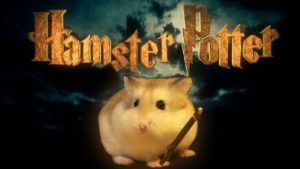 Hamster Potter - Harry Potter, justeres hamstere
