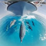 Underwater swim with dolphins in a 360 ° Video