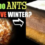 Wie Ameisen überwintern