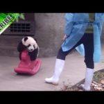 Panda Baby på gunghäst
