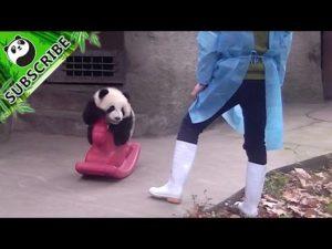 Panda Baby auf einem Schaukelpferd
