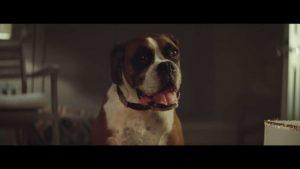 Buster The Boxer: Point de Noël par John Lewis