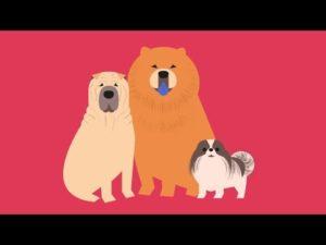 Der Ursprung der Hunde