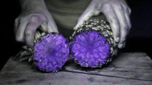 Frukter under ultraviolett ljus