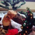 Kanadischer Weihnachtsbaum
