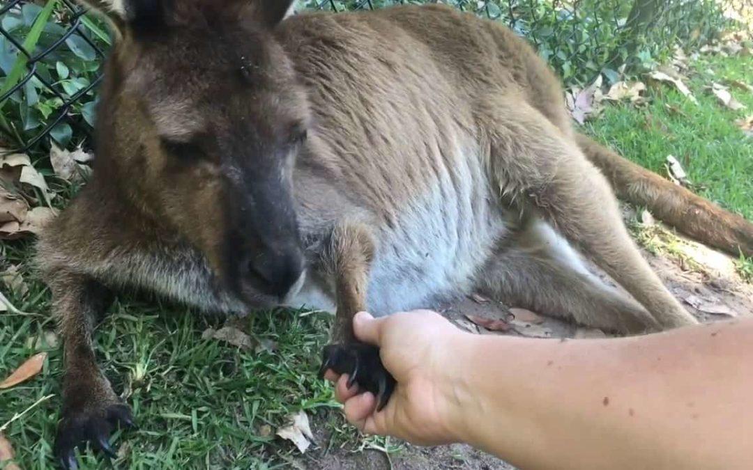 Edmonton hastighet dating Zoo dejtingsajt bra budskap
