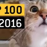 Die 100 viralsten Videos aus 2016