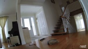 Cat can hardly believe it, down crashing as the robotic vacuum the stairs