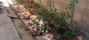 La oss plante kattemynte