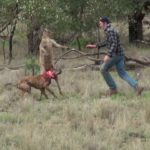 Recently in Australia: Man boxing kangaroo to his dog to protect