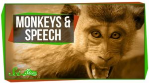 Why monkey can not as we speak