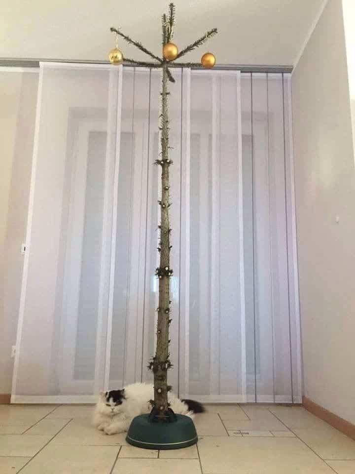 weihnachtsbaum f r katzenbesitzer dravens tales from the