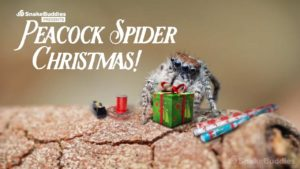 How cute and hilarious but celebrate Christmas Spider