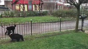 Dog playing ball with passersby