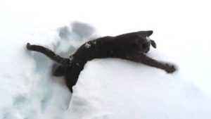 Katter för första gången i snön